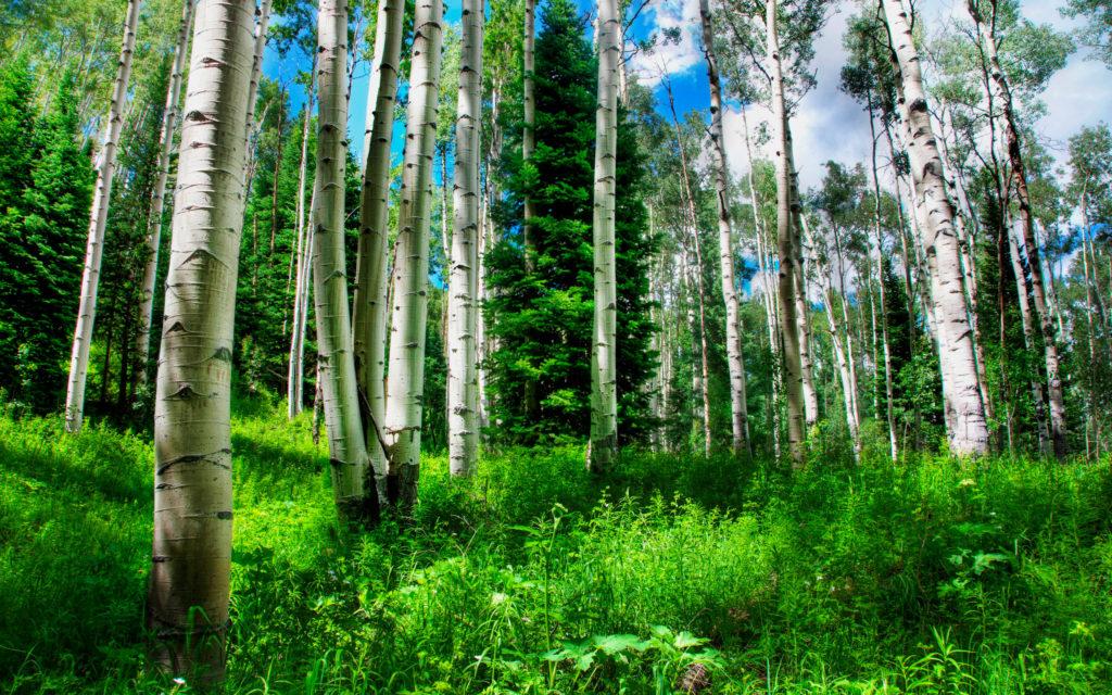 en-guzel-orman-resimleri-fotograflari-25