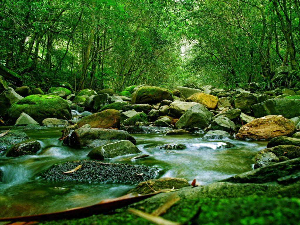 en-guzel-orman-resimleri-fotograflari-29