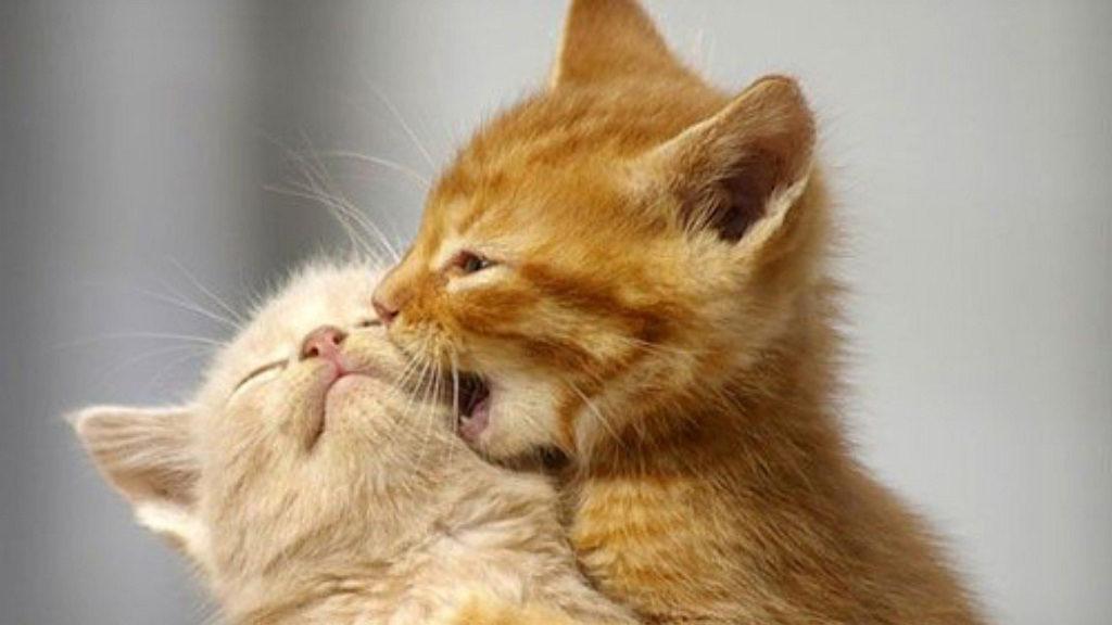 en-komik-kedi-resimleri-05
