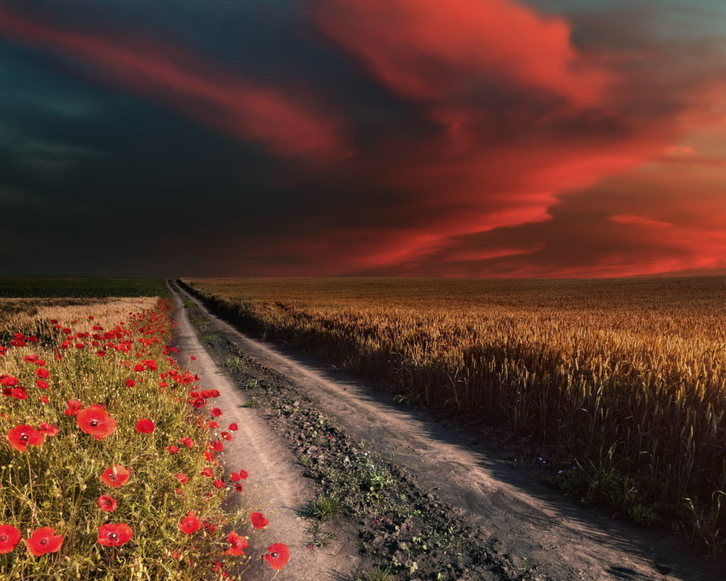 Red-poppies-and-red-clouds