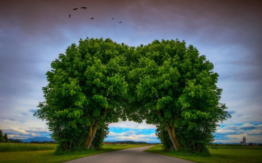 Trees-embrace