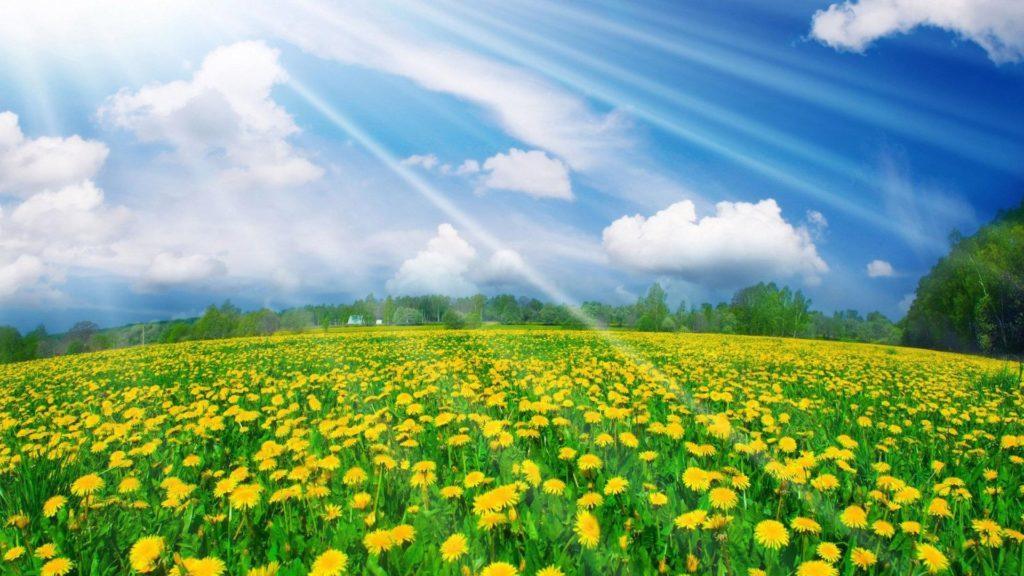 HD-Wallpaper-Widescreen-Spring