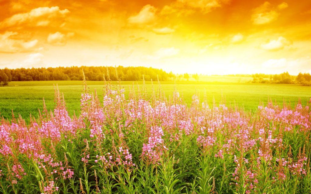 spring-season-wallpaper-backgrounds