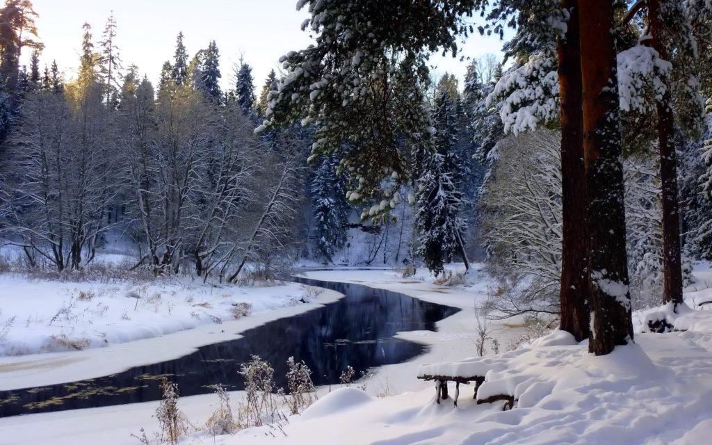 Contrast-winter-colors