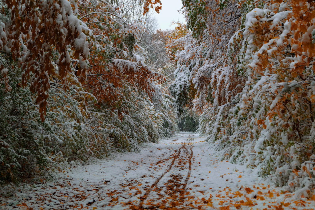 Snow-before-autumn-end