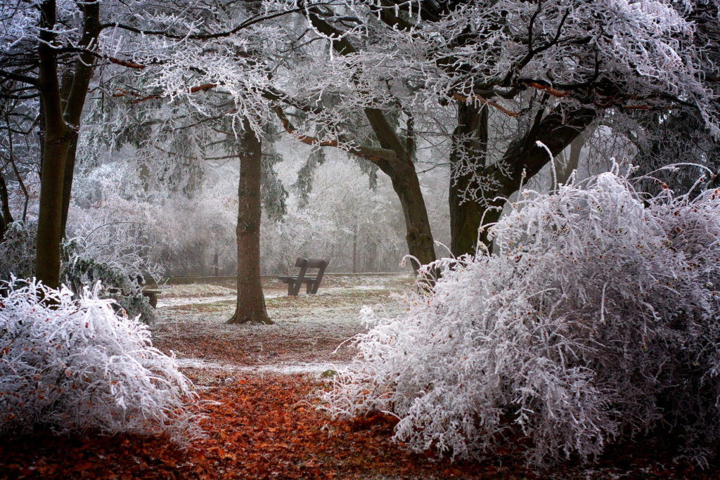 Trees-in-thick-rime