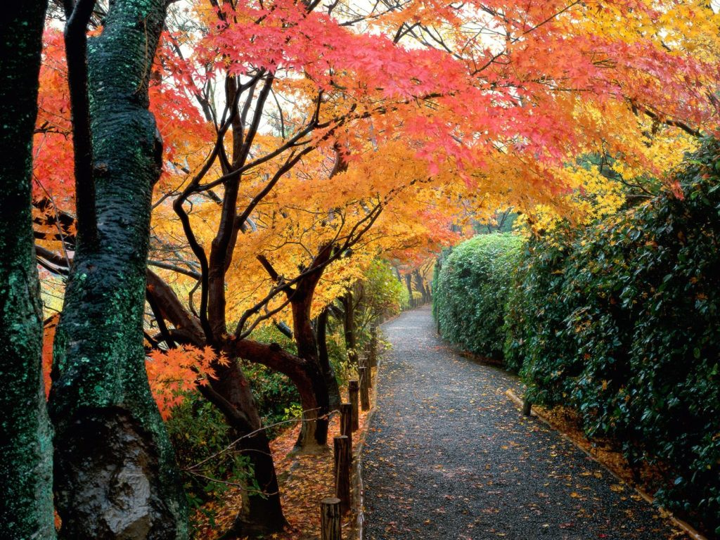 autumn-path