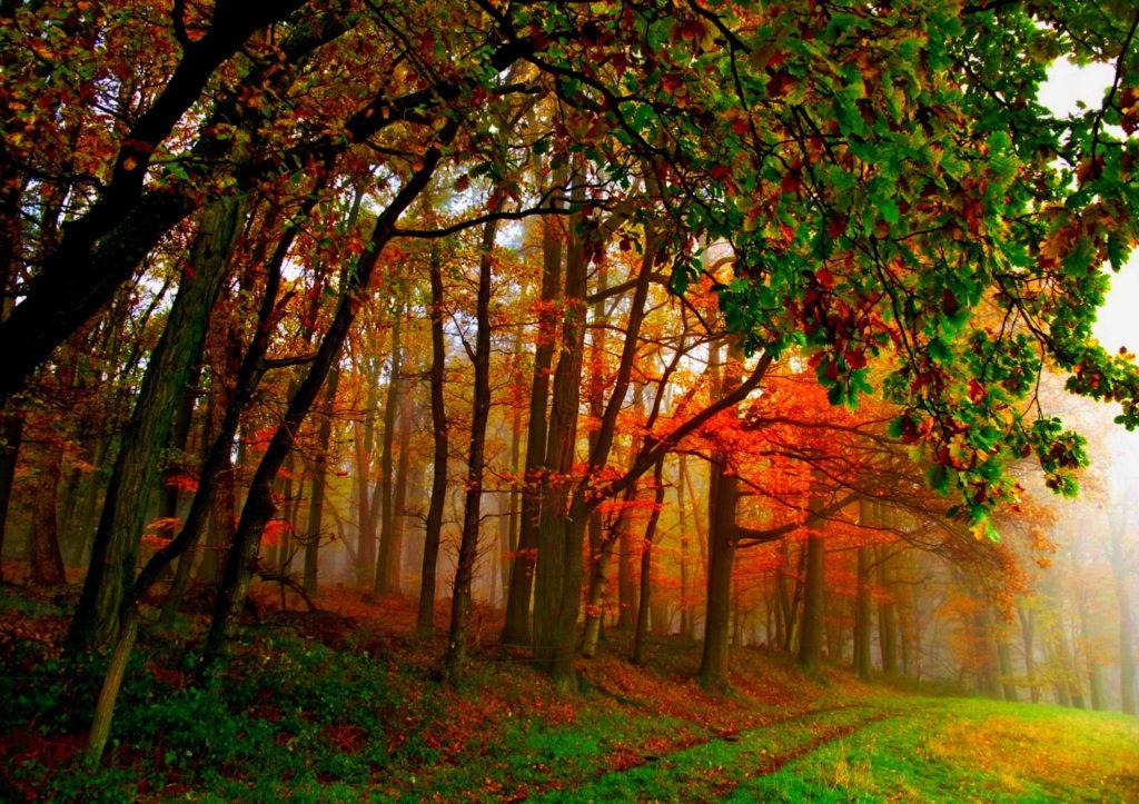 autumn-roof