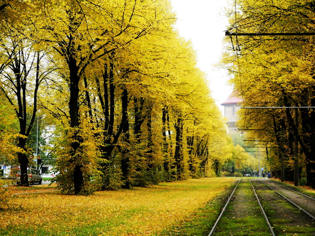 autumn-tram-tracks