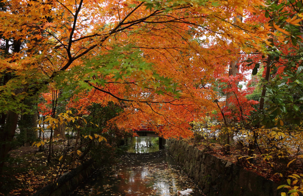 canal-in-the-autumn