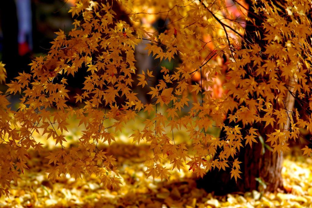 fan-of-leaves