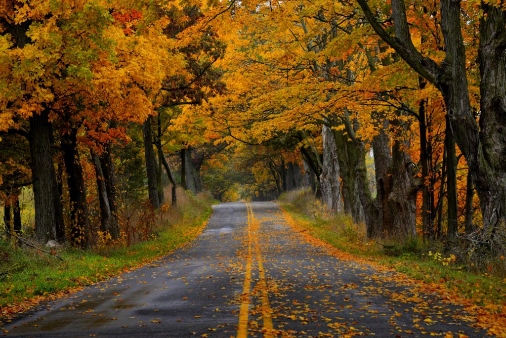 narrow-autumn-road