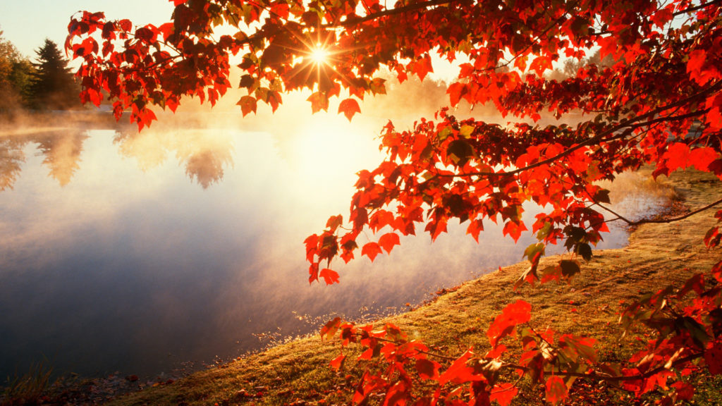red-autumn-morning