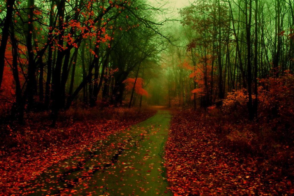 wet-autumn